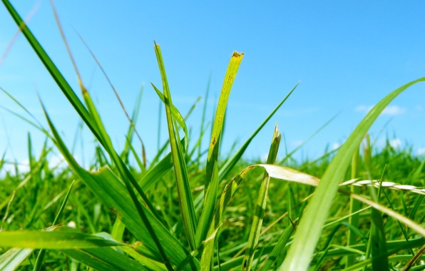 Picture leaves, green, blue, Grass