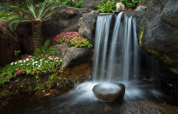 Picture flowers, Palma, stream, stones, waterfall, garden, cascade, Petunia
