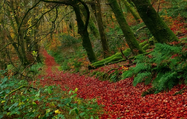 Picture autumn, forest, leaves, trees, England, England, Exmoor National Park, Buckethole Woods, Exmoor national Park