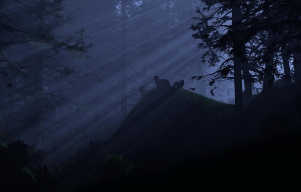Picture light, night, Forest, wolves