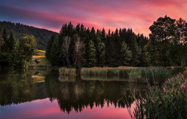 Picture forest, sunset, lake, house