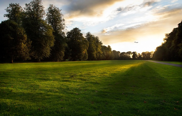 Picture grass, leaves, the sun, rays, light, trees, sunset, birds, lawn, the evening, track, the end …