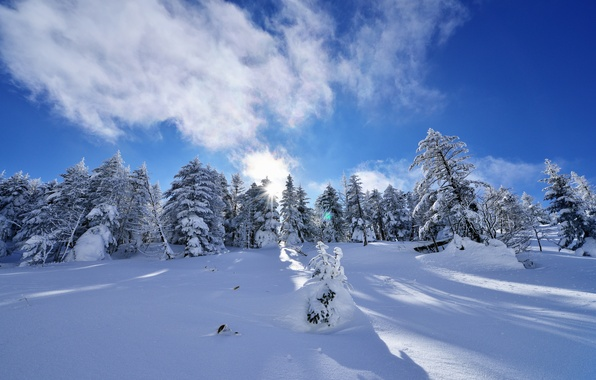 Picture winter, the sky, clouds, snow, trees, spruce, slope