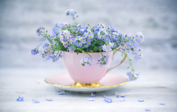 Picture style, mug, Cup, a bunch, forget-me-nots