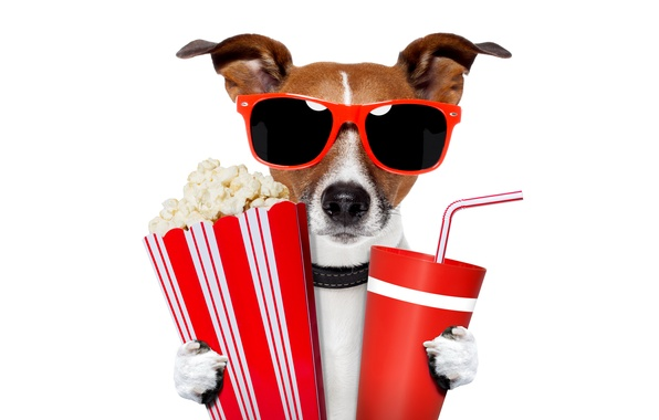 Picture humor, glasses, white background, tube, drink, popcorn, cups, Jack Russell Terrier