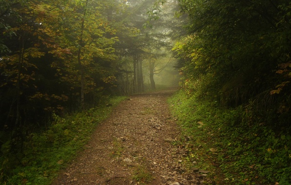 Picture road, forest, fog, track, path