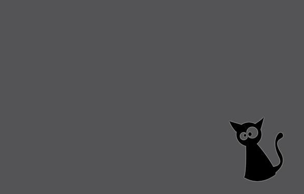 Picture cat, grey background, black cat