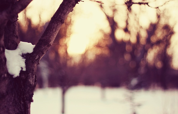 Picture winter, the sky, the sun, light, snow, sunset, tree, glade, the evening, weather, time of ...