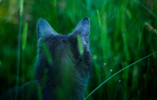 Picture cat, blue, avatar, Attention, James cameron's cat, hunts