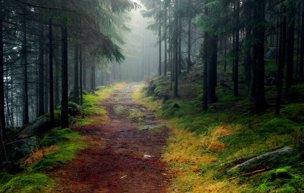 Picture road, forest, trees, fog, stones, moss, spruce, Landscapes
