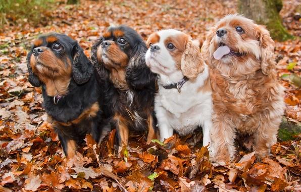 Picture autumn, dogs, friends