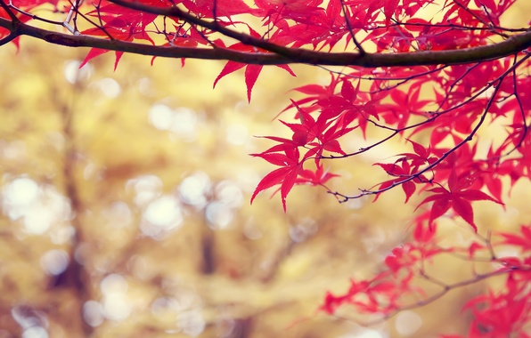 Picture autumn, leaves, nature, branch, red, nature