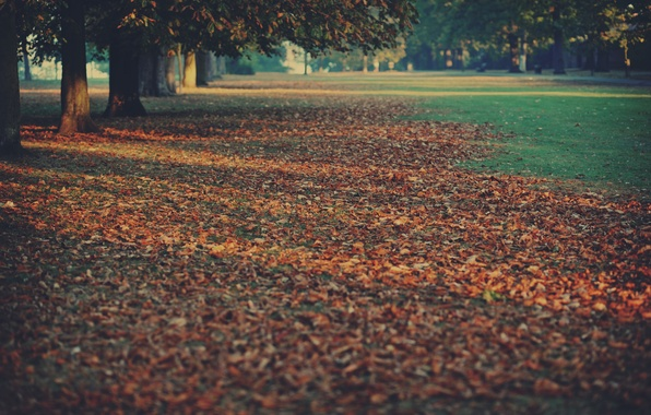Picture autumn, trees, nature, carpet, foliage