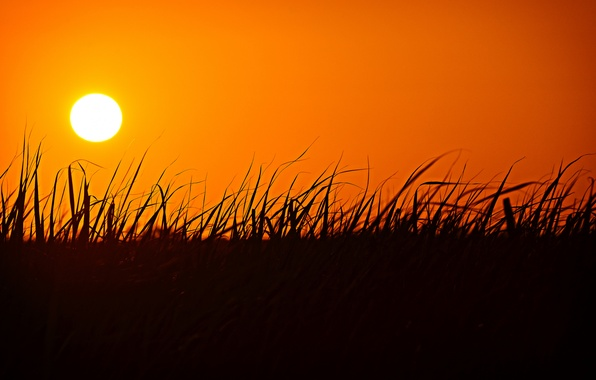 Picture grass, the sun, sunset, silhouette, glow