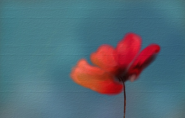 Picture flower, background, texture