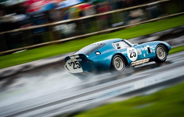 Picture Shelby, 2011, Coupe, Snake, Cobra, Daytona, Shelby Cobra Daytona Coupe, Goodwood Revival, Tom Kristensen