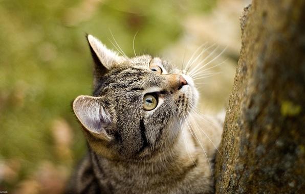 Picture cat, cat, Koshak, Wallpaper