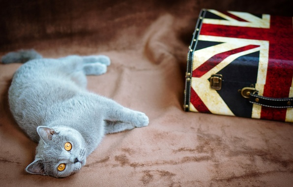 Picture cat, eyes, cat, grey, yellow, flag, UK, lies, suitcase, British