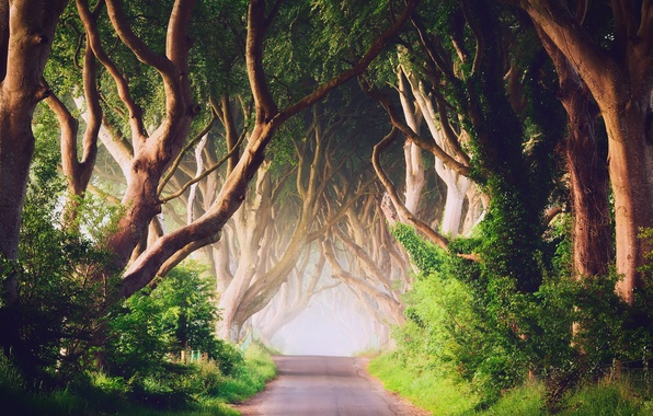 Picture trees, fog, morning, Northern Ireland, Antrim County, the road Bregagh Road, Ballymoney, Dark alley