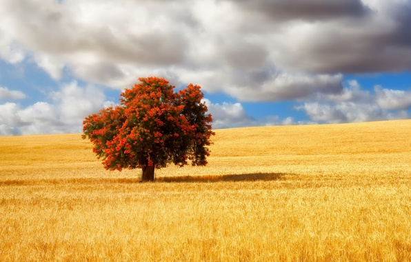 Picture field, summer, tree