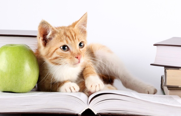 Picture photo, Look, Cat, Book, Cat, Animals, Apples