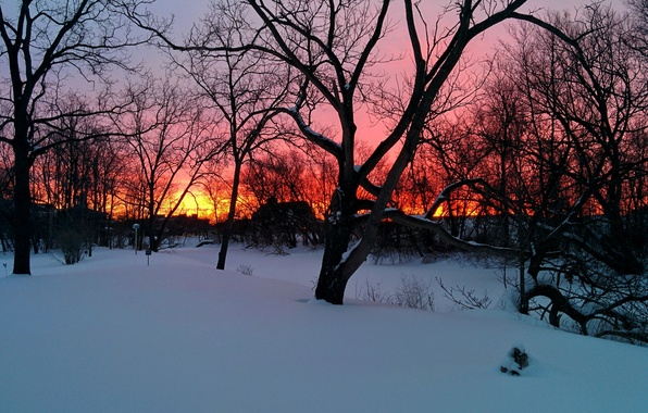 Picture trees, sunset, winter, snow, houses, branches, orange sky