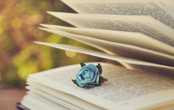 Picture text, rose, book, page, blue, bokeh