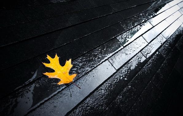 Picture autumn, water, sheet, bridge