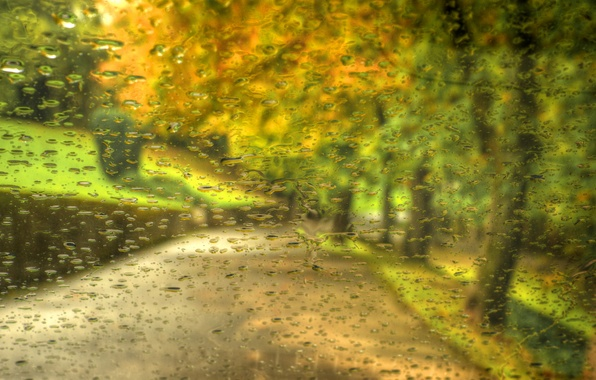 Picture autumn, forest, leaves, drops, trees, nature, Park, rain, walk, forest, road, rain, trees, nature, park, …