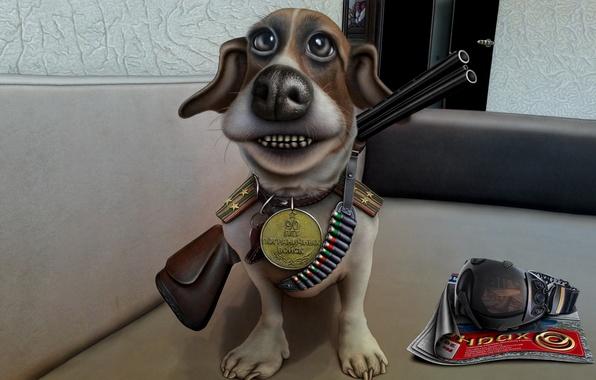 Picture dog, medal, the gun, caricature, shoulder straps, bandolier, the guard