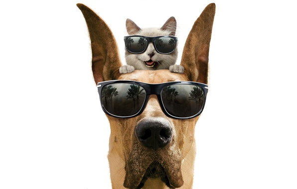 Picture cat, smile, dog, glasses, white background, dog, Marmaduke, Marmaduke