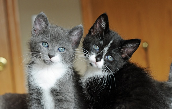 Picture mustache, eyes, kittens, cute, faces