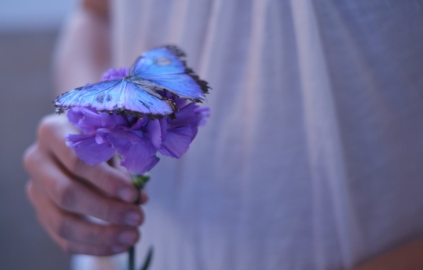 Picture purple, girl, flowers, background, Wallpaper, butterfly, hand, beautiful, flower