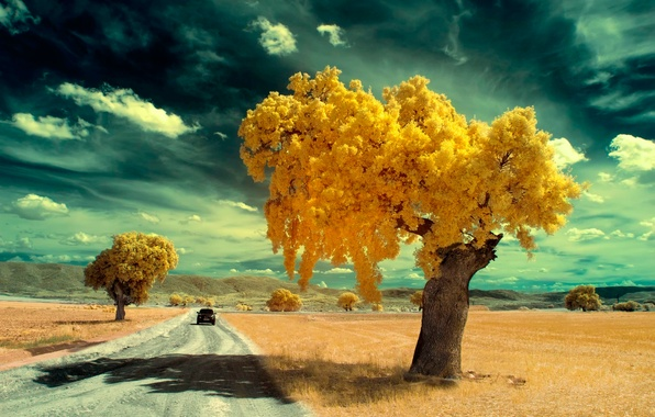 Picture road, machine, trees, filter