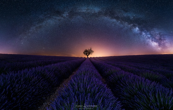 Picture field, the sky, stars, night, tree, the evening, the milky way, lavender