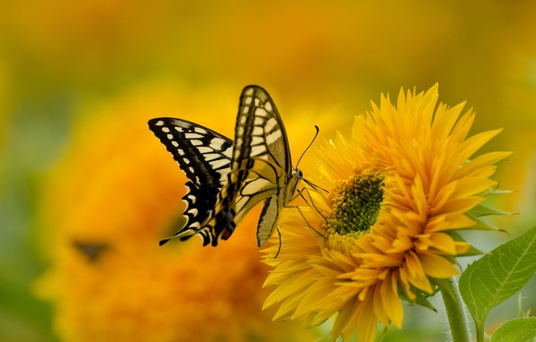 Picture flower, nature, butterfly, paint, wings, petals, swallowtail