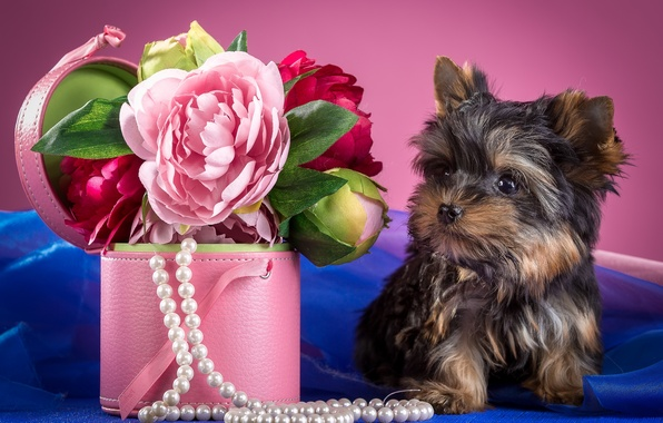 Picture flowers, necklace, puppy, peonies, Yorkshire Terrier