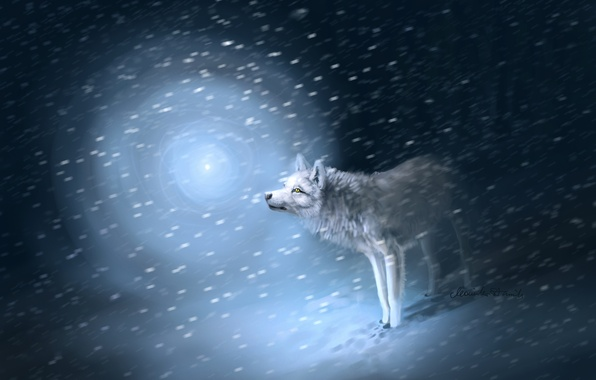 Picture light, snow, traces, Wolf, Blizzard