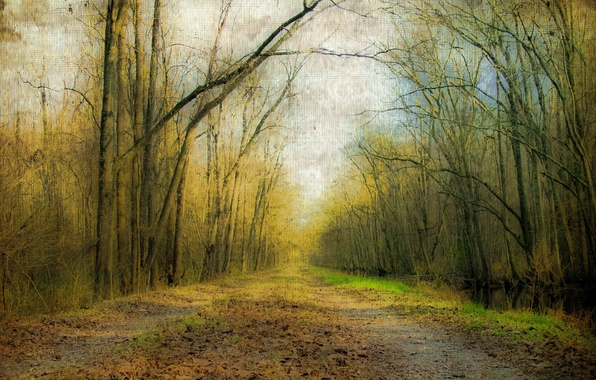 Picture road, forest, nature, style