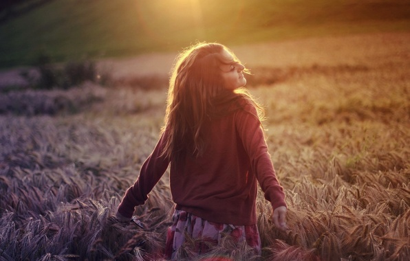 Picture wheat, field, light, Girl