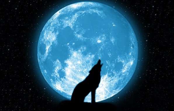 Picture stars, the moon, wolf, beautiful, howl