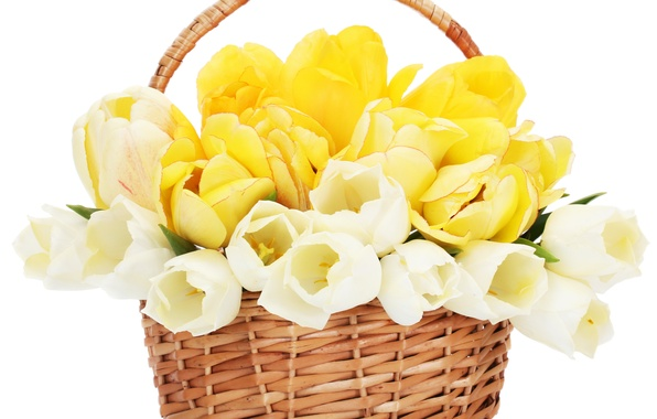 Picture flower, flowers, nature, basket, Tulip, bouquet, spring, tulips, basket, beautiful