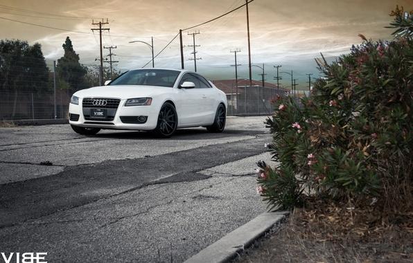 Picture machine, Audi, vibe