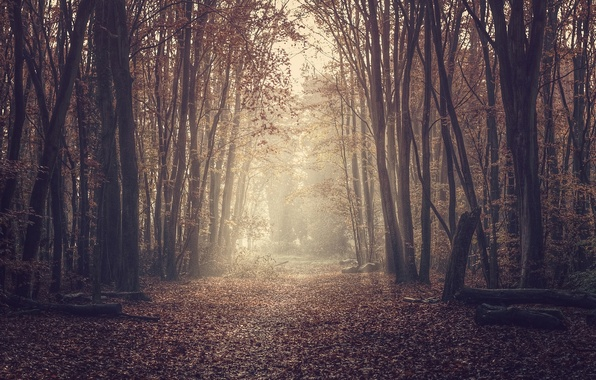 Picture road, forest, nature, foliage
