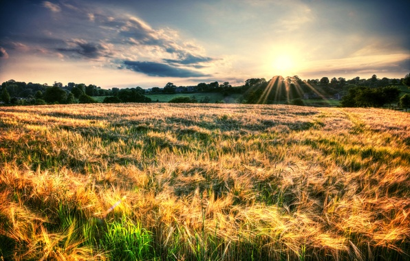 Picture field, the sky, the sun, rays, trees, landscape, nature, background, widescreen, Wallpaper, foliage, plants, spikelets, …