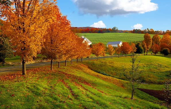 Picture road, field, autumn, the sky, clouds, nature, tree, house
