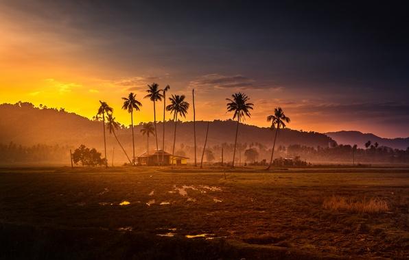 Picture sunset, mountains, palm trees, jungle, hut, malaysia