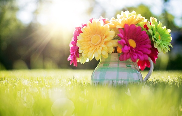 Picture grass, the sun, light, flowers, nature, bouquet, spring, pitcher, bokeh, Gerbera