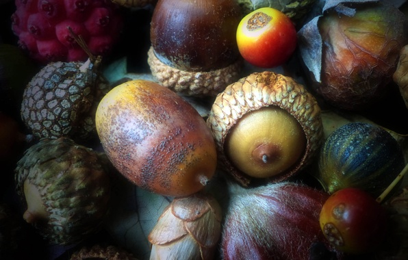 Picture autumn, fruit, nuts, acorn