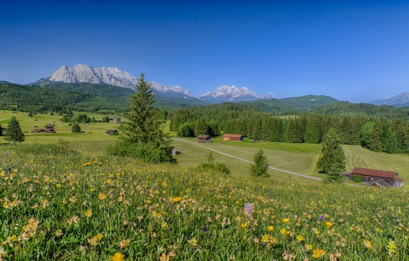 Picture forest, landscape, flowers, mountains, home, Germany, Bayern, Alps, Germany, meadows, Bavaria, Alps